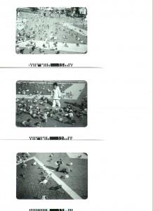 pigeons-2-001-218x300