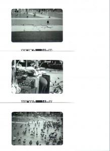 pigeons-3-0011-218x300